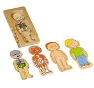 Puzzles el cuerpo humano niño el conjunto