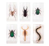 Bloques con especímenes de insectos, 6 unidades Pack de 6