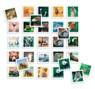 Juego de memoria foto los animales salvajes el juego